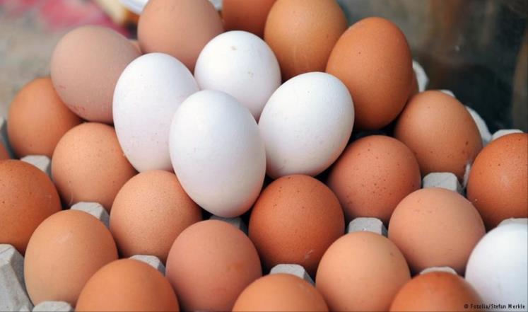 البيض البني الأبيض أيهما أفضل