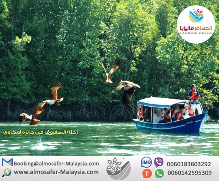 رحلة المنجروف في جزيرة لانكاوي(قارب خاص) 554656405