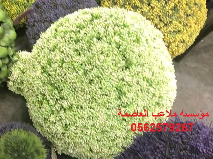 ديكورات عشب صناعي مؤسسه ملاعب العاصمة عشب جداري ديكورات حجريه 0562579267 137440866