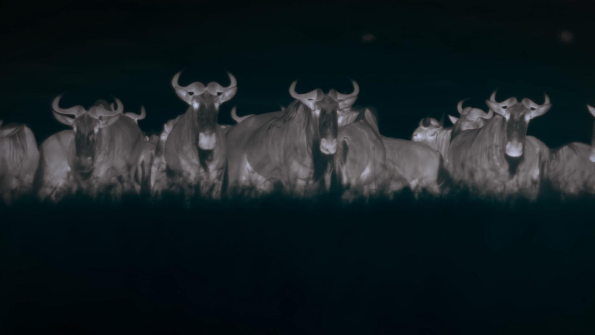 الليل على الأرض Night On Earth[مترجم] [1080p] تحميل تورنت 5 arabp2p.com